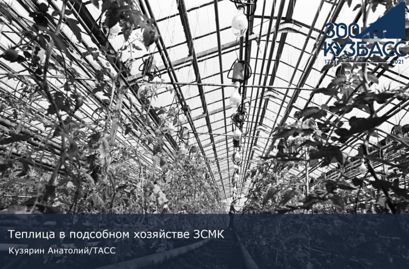 300 лет сельского хозяйства Кузбасса