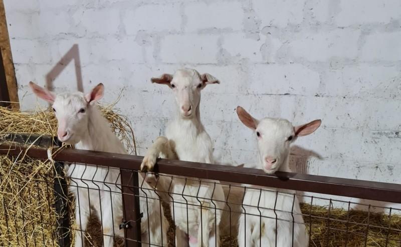 Кузбасская ферма претендует на грант по агротуризму