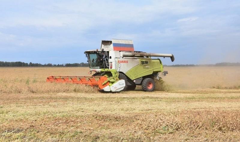 Уборка зерновых культур в Кузбассе завершена на четверть